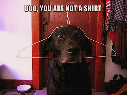 Image from DogsRFunny.Com