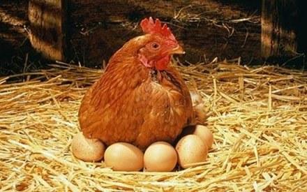 Image from I-Love-Animal.Blogspot.Com
