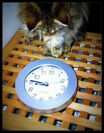 Image from For-Cats-Only.Com
