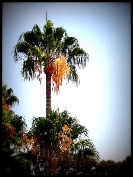 palm tree from outside our windows